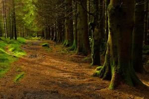 Magyarország 20%-a erdő