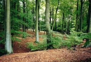Kellemes kikapcsolódás, az erdei kirándulás