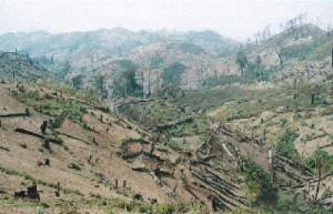 50 év és itt ismét erdő lesz